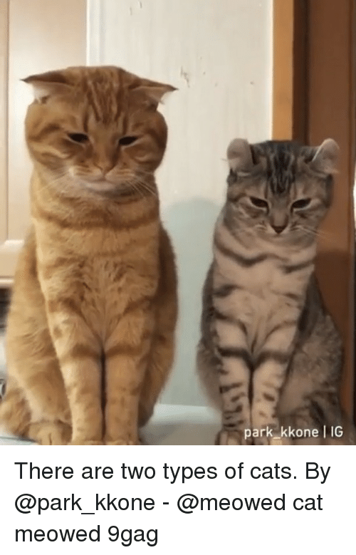 9gag, Cats, and Memes: park kkone 1G There are two types of cats. By @park_kkone - @meowed cat meowed 9gag