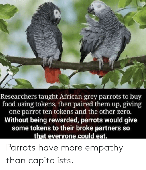 Empathy: Parrots have more empathy than capitalists.