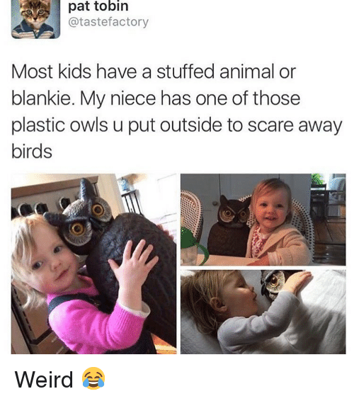 stuffed animal: pat tobin  @tastefactory  Most kids have a stuffed animal or  blankie. My niece has one of those  plastic owls u put outside to scare away  birds Weird 😂