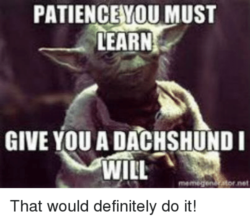 Definitely, Memes, and Definition: PATIENCE YOU MUST  LEARN  GIVE YOU A DACHSHUND I  WILL  memegen Ator net That would definitely do it!