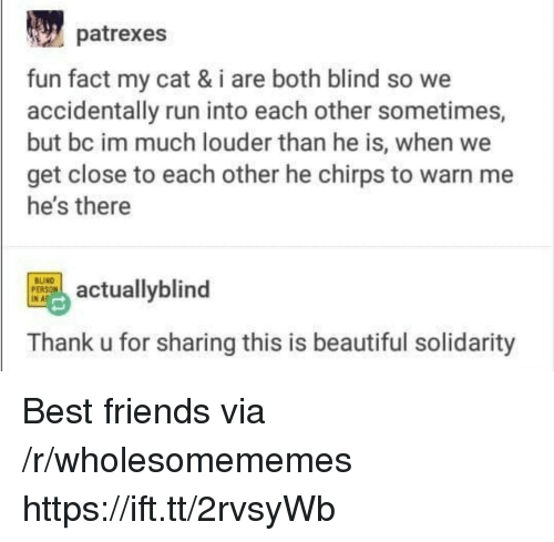 Beautiful, Friends, and Run: patrexes  fun fact my cat & i are both blind so we  accidentally run into each other sometimes,  but bc im much louder than he is, when we  get close to each other he chirps to warn me  he's there  tuallyblind  INAF  Thank u for sharing this is beautiful solidarity Best friends via /r/wholesomememes https://ift.tt/2rvsyWb