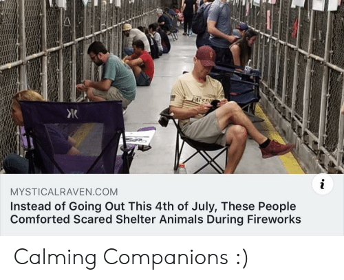Animals, 4th of July, and Fireworks: PATS  i  MYSTICALRAVEN.COM  Instead of Going Out This 4th of July, These People  Comforted Scared Shelter Animals During Fireworks Calming Companions :)