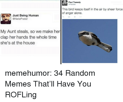 Being Human: Paul Tweedy  Paul2eD  This bird keeps itself in the air by sheer force  of anger alone  Just Being Human  @NatePrater  My Aunt steals, so we make her  clap her hands the whole time  she's at the house memehumor:  34 Random Memes That'll Have You ROFLing