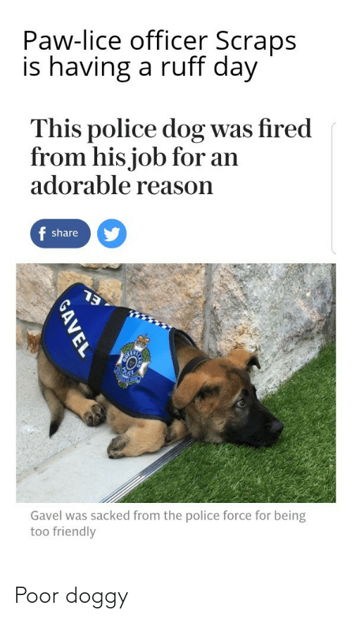 police dog: Paw-lice officer Scraps  is having a ruff day  This police dog was fired  from his job for an  adorable reason  share  Gavel was sacked from the police force for being  too friendly Poor doggy