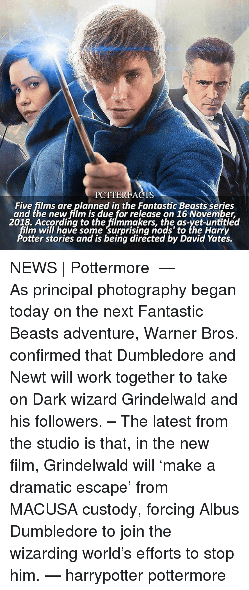 fantastic beasts: PCTTERFACTS  Five films are planned in the Fantastic Beasts series  and the new film is due for release on 16 November,  2018. According to the filmmakers, the as-yet-untitled  lm will have some surprising nods' to the Harry  otter stories and is being directed by David Yates. NEWS | Pottermore ⠀⠀⠀⠀⠀⠀⠀⠀⠀⠀⠀⠀ — As principal photography began today on the next Fantastic Beasts adventure, Warner Bros. confirmed that Dumbledore and Newt will work together to take on Dark wizard Grindelwald and his followers. – The latest from the studio is that, in the new film, Grindelwald will 'make a dramatic escape' from MACUSA custody, forcing Albus Dumbledore to join the wizarding world's efforts to stop him. — harrypotter pottermore