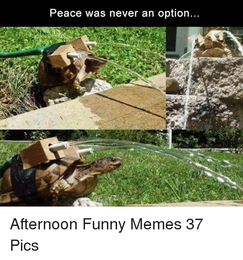 Funny, Memes, and Never: Peace was never an option Afternoon Funny Memes 37 Pics
