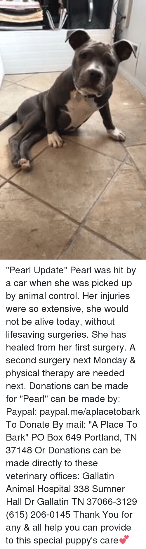 "Alive, Animals, and Boxing: ""Pearl Update"" Pearl was hit by a car when she was picked up by animal control.  Her injuries were so extensive, she would not be alive today, without lifesaving surgeries. She has healed from her first surgery.   A second surgery next Monday & physical therapy are needed next. Donations can be made for ""Pearl"" can be made by: Paypal: paypal.me/aplacetobark To Donate By mail:  ""A Place To Bark"" PO Box 649 Portland, TN 37148 Or Donations can be made directly to these veterinary offices: Gallatin Animal Hospital 338 Sumner Hall Dr Gallatin TN 37066-3129 (615) 206-0145  Thank You for any & all help you can provide to this special puppy's care💕"