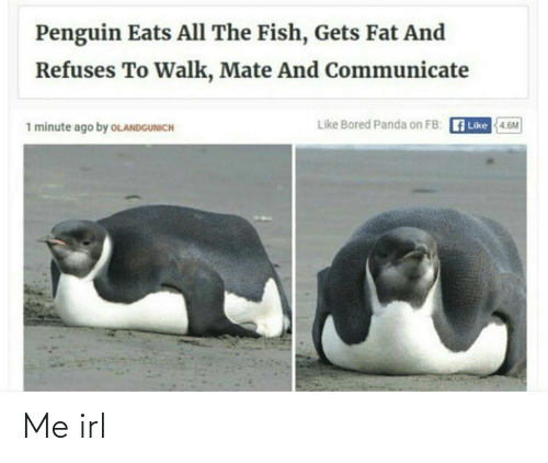 Bored, Panda, and Fish: Penguin Eats All The Fish, Gets Fat And  Refuses To Walk, Mate And Communicate  Like Bored Panda on FB: A Like  1 minute ago by OLANDGUNICH  4.6M Me irl