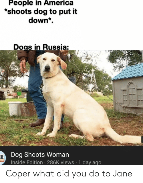 America, Dogs, and Russia: People in America  *shoots dog to put it  down*  Dogs in Russia:  DE Dog Shoots Woman  Inside Edition 286K views 1 day ago  ON Coper what did you do to Jane