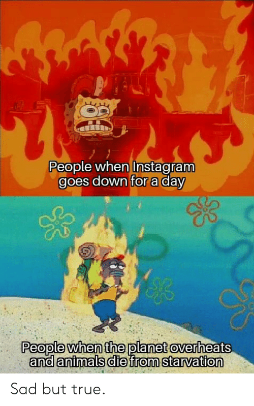 Animals, Instagram, and True: People when Instagram  goes down for a day  People when the planet overheats  and animals diefrom starvation Sad but true.