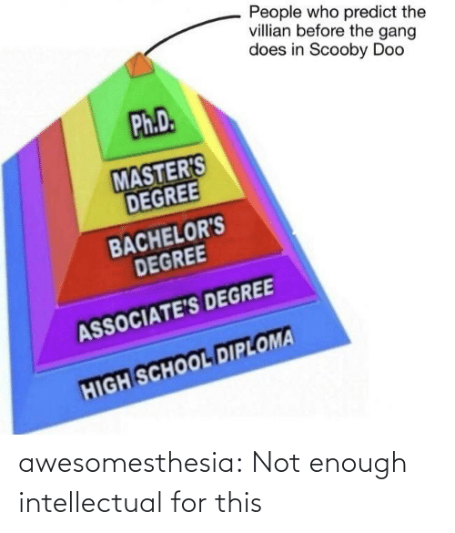 School, Scooby Doo, and Tumblr: People who predict the  villian before the gang  does in Scooby Doo  Ph.D.  MASTER'S  DEGREE  BACHELOR'S  DEGREE  ASSOCIATE'S DEGREE  HIGH SCHOOL DIPLOMA awesomesthesia:  Not enough intellectual for this