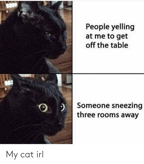 Irl, Cat IRL, and Cat: People yelling  at me to get  off the table  Someone sneezing  three rooms away My cat irl