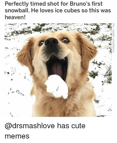 Cute, Funny, and Heaven: Perfectly timed shot for Bruno's first  snowball. He loves ice cubes so this was  heaven! @drsmashlove has cute memes