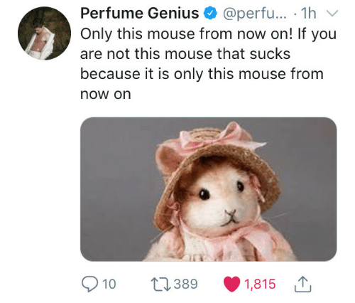 Genius, Mouse, and Perfume: Perfume Genius @perfu... 1hv  Only this mouse from now on! If you  are not this mouse that sucks  because it is only this mouse from  now on  a)  10 389 1,815