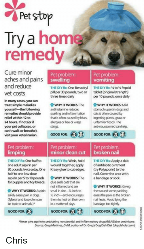 Can You Give Your Dog Prednisone And Benadryl