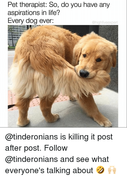 Is Kill: Pet therapist: So, do you have any  aspirations in life?  Every dog ever:  @high fiveexpert @tinderonians is killing it post after post. Follow @tinderonians and see what everyone's talking about 🤣 🙌🏼