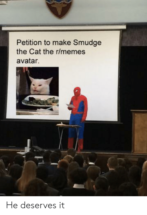 Avatar: Petition to make Smudge  the Cat the r/memes  avatar. He deserves it