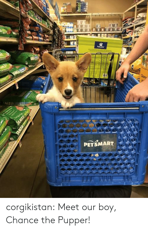 Petsmart: PETSMART  FI corgikistan:  Meet our boy, Chance the Pupper!
