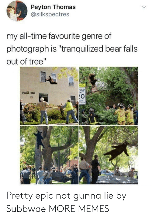 "Anaconda, Dank, and Memes: Peyton Thomas  @silkspectres  my all-time favourite genre of  photograph is ""tranquilized bear falls  out of tree""  100  ewill ent  EED  MIT  :0 Pretty epic not gunna lie by Subbwae MORE MEMES"
