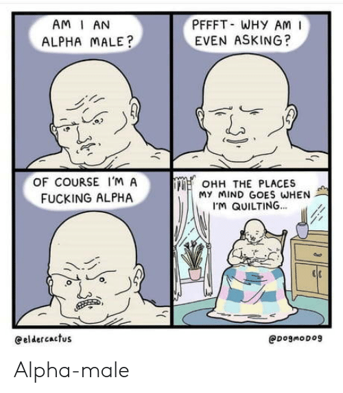 Fucking, Mind, and Asking: PFFFT WHY AM  EVEN ASKING?  AM I AN  ALPHA MALE?  OF COURSE I'M A  OHH THE PLACES  My MIND GOES WHEN  M QUILTING...  FUCKING ALPHA  eeldercactus  @DogmoDog Alpha-male