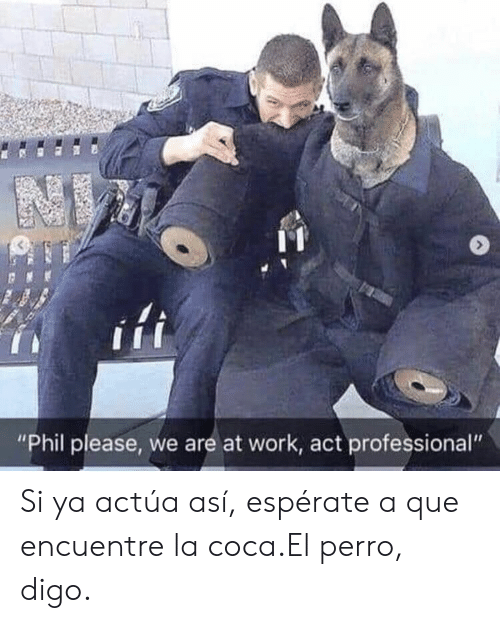 "Work, Act, and Que: ""Phil please, we are at work, act professional"" Si ya actúa así, espérate a que encuentre la coca.El perro, digo."