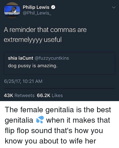 Flopping: Philip Lewis o  Phil Lewis  A reminder that commas are  extremelyyyy useful  shia laCunt @fuzzycuntkins  dog pussy is amazing.  6/25/17, 10:21 AM  43K Retweets 66.2K Likes The female genitalia is the best genitalia 💦 when it makes that flip flop sound that's how you know you about to wife her