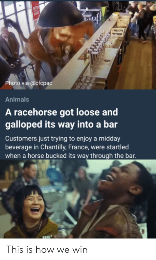 Bucked: Photo via @cfcpac  Animals  A racehorse got loose and  galloped its way into a bar  Customers just trying to enjoy a midday  beverage in Chantilly, France, were startled  when a horse bucked its way through the bar This is how we win