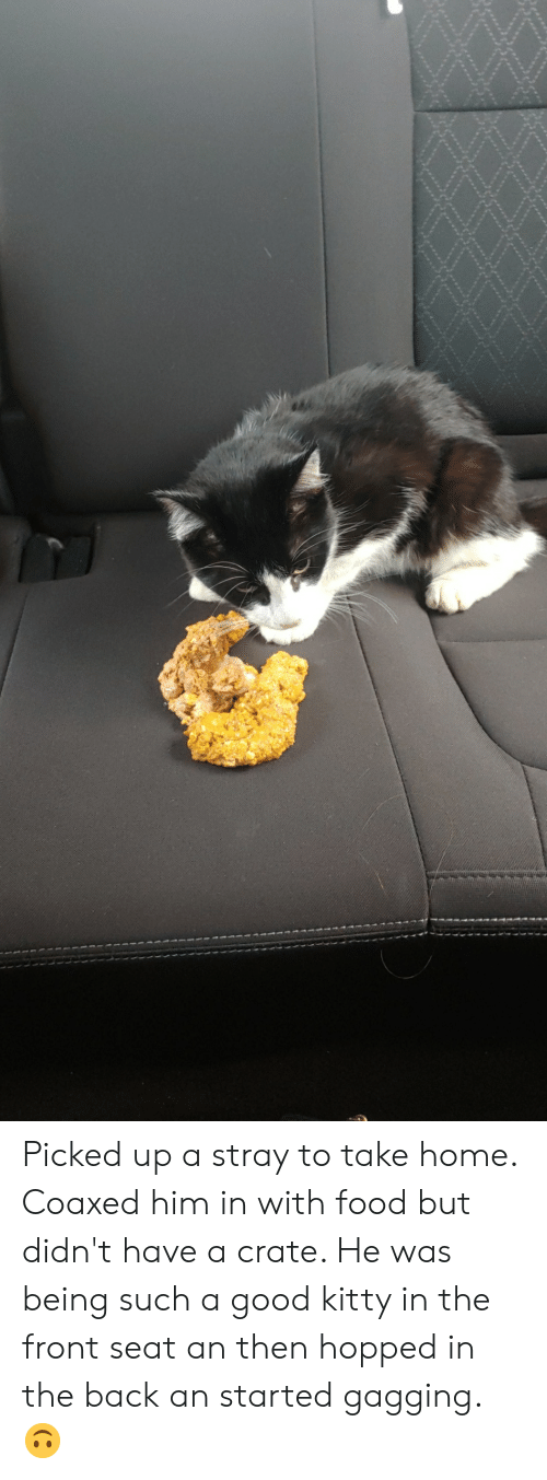 gagging: Picked up a stray to take home. Coaxed him in with food but didn't have a crate. He was being such a good kitty in the front seat an then hopped in the back an started gagging. 🙃