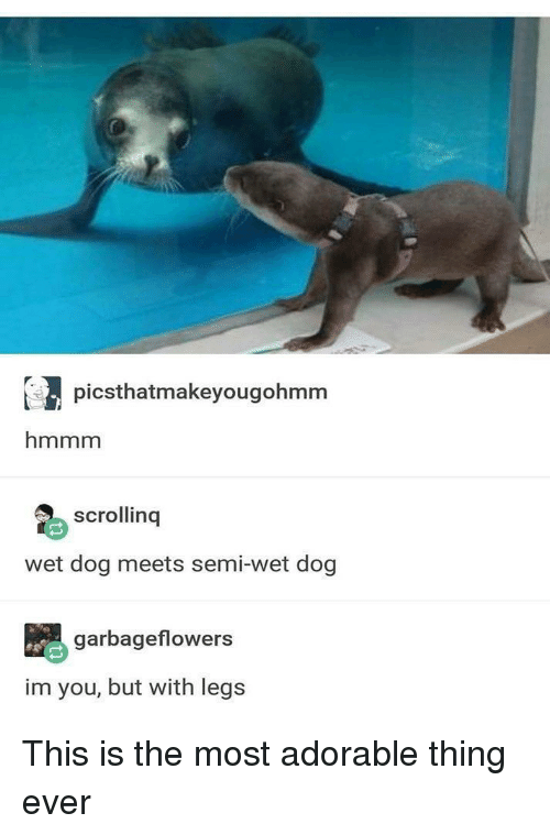 Adorable, Dog, and Wet: picsthatmakeyougohmm  hmmm  scrollinq  wet dog meets semi-wet dog  garbageflowers  im you, but with legs This is the most adorable thing ever