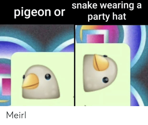 Party, MeIRL, and Pigeon: pigeon or hake wearing a  party hat Meirl