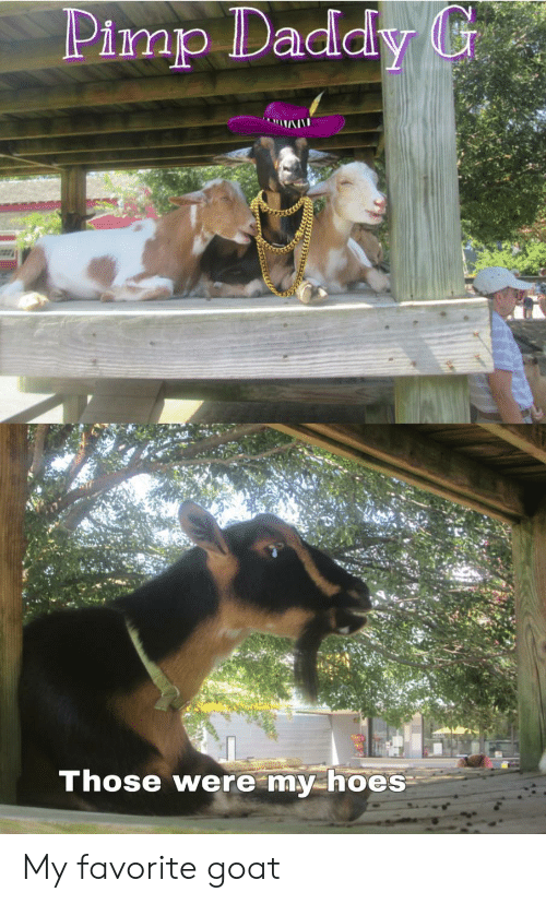 Reddit, Goat, and Daddy: Pimp Daddy G  Those were my hoes My favorite goat