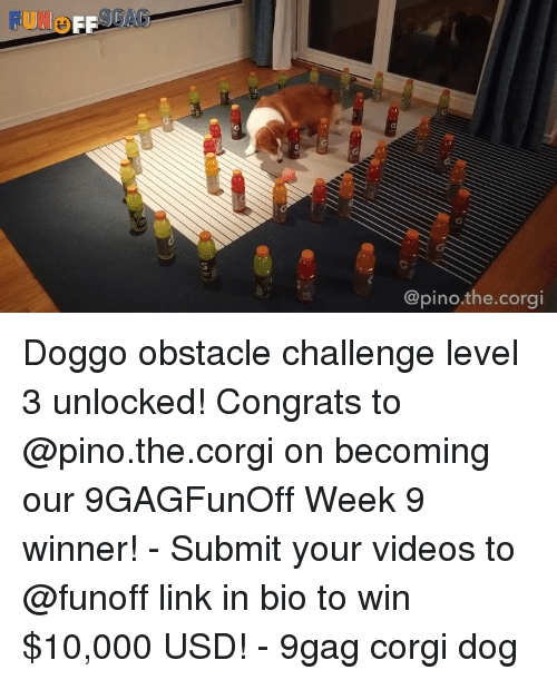 9gag, Corgi, and Memes: @pino.the.corgi Doggo obstacle challenge level 3 unlocked! Congrats to @pino.the.corgi on becoming our 9GAGFunOff Week 9 winner! - Submit your videos to @funoff link in bio to win $10,000 USD! - 9gag corgi dog