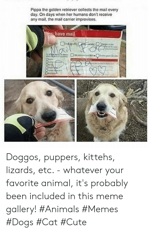 Animals, Cute, and Dogs: Pippa the golden retriever collects the mail every  day. On days when her humans don't receive  any mail, the mail carrier improvises.  have mai Doggos, puppers, kittehs, lizards, etc. - whatever your favorite animal, it's probably been included in this meme gallery! #Animals #Memes #Dogs #Cat #Cute