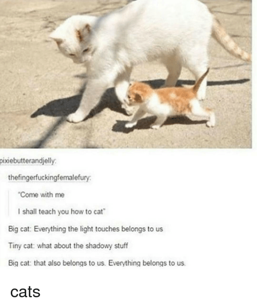 """big cat: pixiebutterandjelly.  thefingerfuckingfemalefury.  """"Come with me  I shall teach you how to cat  Big cat: Everything the light touches belongs to us  Tiny cat: what about the shadowy stuff  Big cat: that also belongs to us. Everything belongs to us. cats"""