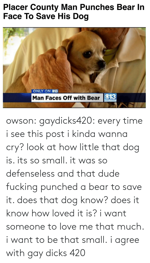 love me: Placer County Man Punches Bear In  Face To Save His Dog   ONLY ON O13  Man Faces Off with Bear O13 owson: gaydicks420:  every time i see this post i kinda wanna cry? look at how little that dog is. its so small. it was so defenseless and that dude fucking punched a bear to save it. does that dog know? does it know how loved it is? i want someone to love me that much. i want to be that small.  i agree with gay dicks 420