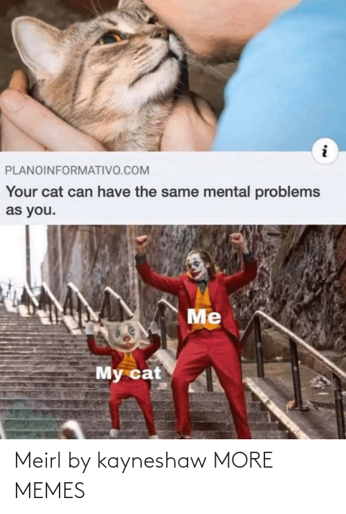you me: PLANOINFORMATIVO.COM  Your cat can have the same mental problems  as you.  Me  My cat Meirl by kayneshaw MORE MEMES