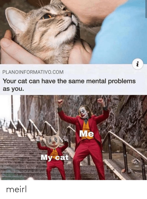 The Same: PLANOINFORMATIVO.COM  Your cat can have the same mental problems  as you.  Me  My cat meirl