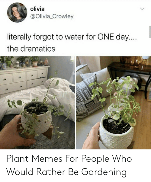 Rather Be: Plant Memes For People Who Would Rather Be Gardening