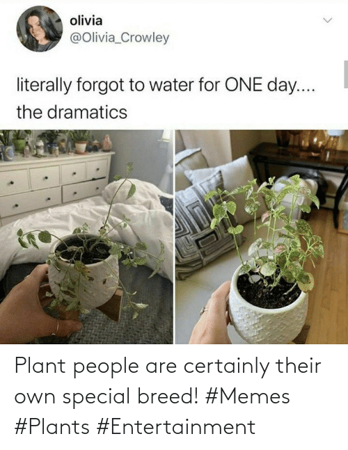 special: Plant people are certainly their own special breed! #Memes #Plants #Entertainment