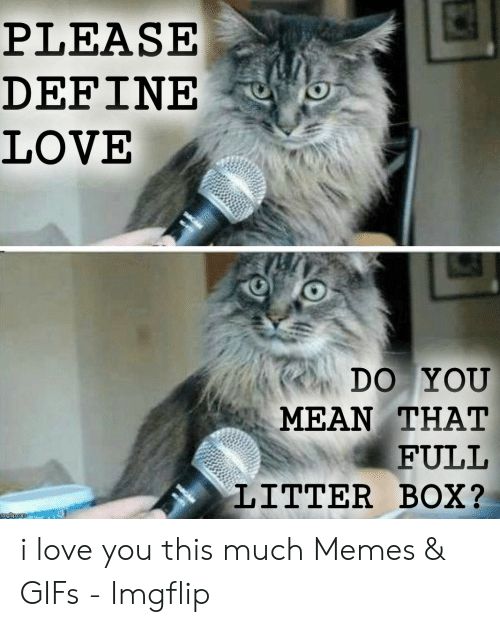 Love, Memes, and I Love You: PLEASE  DEFINE  LOVE  DO YOU  MEAN THAT  FULL  LITTER BOX? i love you this much Memes & GIFs - Imgflip