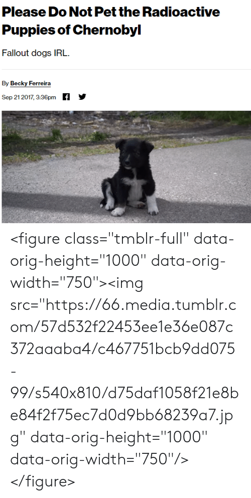 "Dogs, Puppies, and Tumblr: Please Do Not Pet the Radioactive  Puppies of Chernobyl  Fallout dogs IRL  By Becky Ferreira  f  Sep 21 2017, 3:36pm <figure class=""tmblr-full"" data-orig-height=""1000"" data-orig-width=""750""><img src=""https://66.media.tumblr.com/57d532f22453ee1e36e087c372aaaba4/c467751bcb9dd075-99/s540x810/d75daf1058f21e8be84f2f75ec7d0d9bb68239a7.jpg"" data-orig-height=""1000"" data-orig-width=""750""/></figure>"