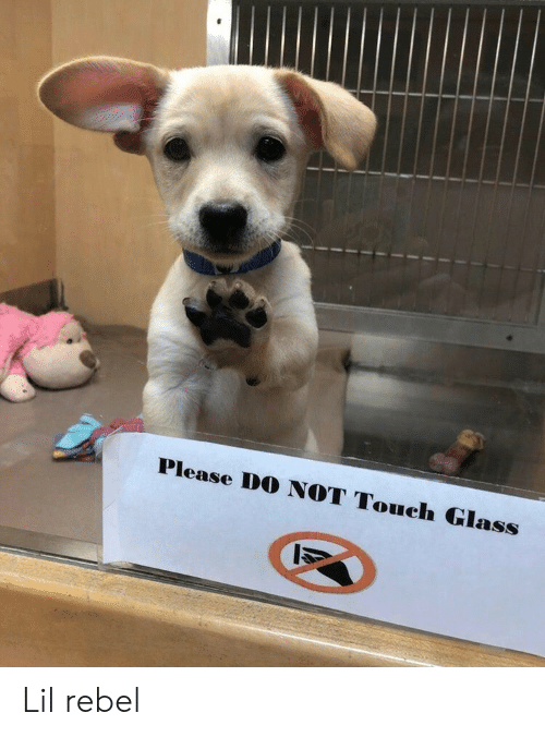 Please Do: Please DO NOT Touch Glass Lil rebel