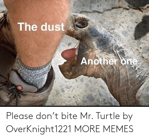 Mr: Please don't bite Mr. Turtle by OverKnight1221 MORE MEMES