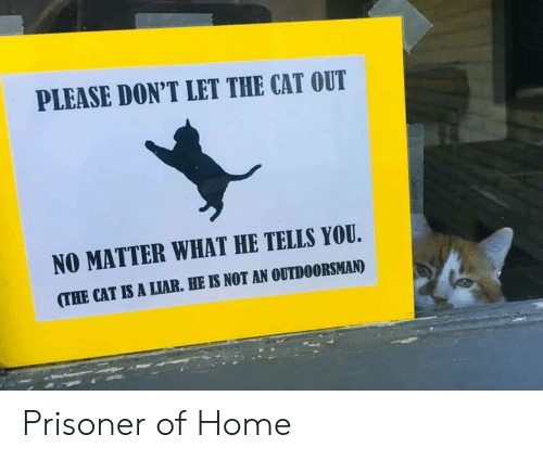 Home, Cat, and You: PLEASE DON'T LET THE CAT OUT  NO MATTER WHAT HE TELLS YOU  (THE CAT IS A LIAR. HE IS NOT AN OUTDOORSMAN) Prisoner of Home