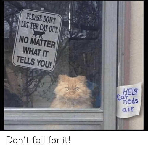 Fall, Cat, and Air: PLEASE DON'T  LET THE CAT OUT.  NO MATTER  WHAT IT  TELLS YOU!  HEL  Caf  neds  air Don't fall for it!