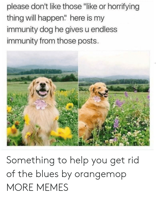 "endless: please don't like those ""like or horrifying  thing will happen"" here is my  immunity dog he gives u endless  immunity from those posts. Something to help you get rid of the blues by orangemop MORE MEMES"