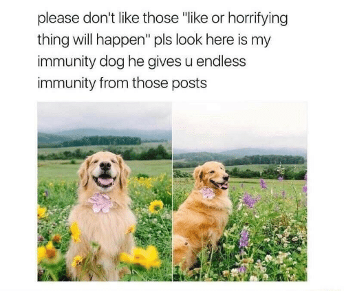"""Dog, Will, and Thing: please don't like those """"like or horrifying  thing will happen"""" pls look here is my  immunity dog he gives u endless  immunity from those posts"""