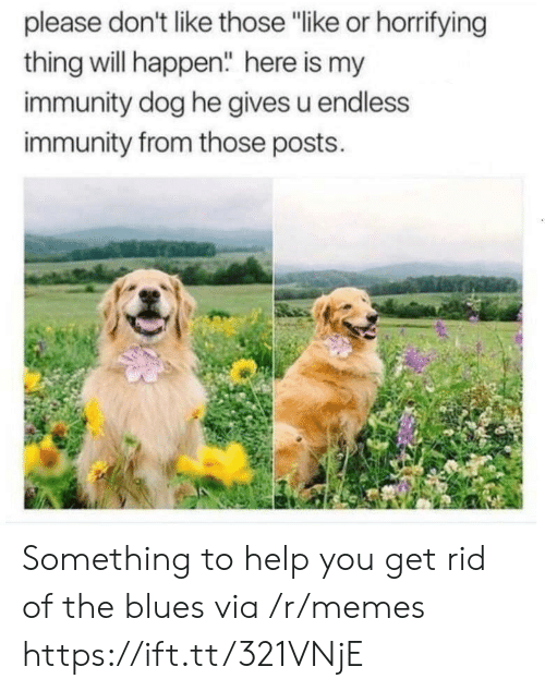 "endless: please don't like those ""like or horrifying  thing will happen"" here is my  immunity dog he gives u endless  immunity from those posts. Something to help you get rid of the blues via /r/memes https://ift.tt/321VNjE"