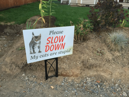 Cats Are: Please  SLOW  1 DOWN  My cats are stupid