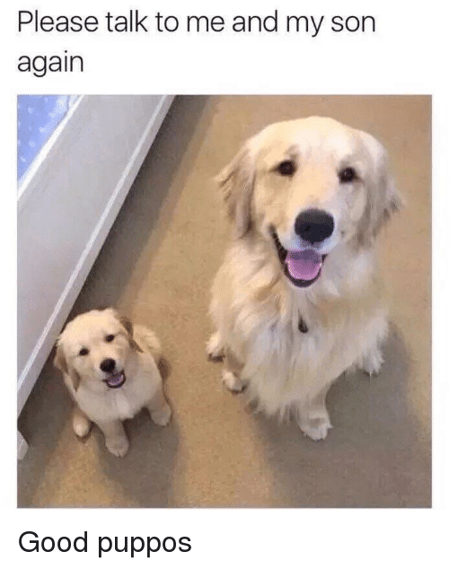 Good, Son, and Please: Please talk to me and my son  again Good puppos
